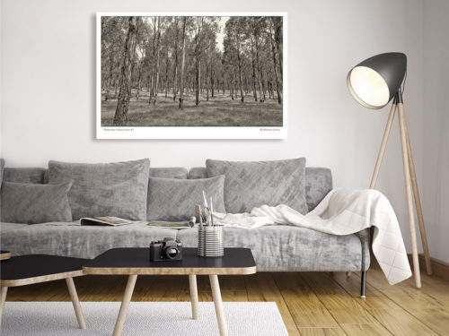 Classic-Gallery-Landscape-ALEXANDRA-FOREST-MONO-1-wall-art-Photography-by-Michael-Collins