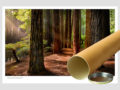 Classic-Gallery-Landscape-REDWOODS-OTWAYS-1-postal-tube-Photography-by-Michael-Collins