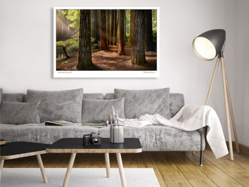 Classic-Gallery-Landscape-REDWOODS-OTWAYS-1-wall-art-Photography-by-Michael-Collins